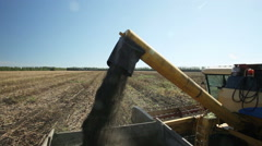 Combine harvester unloaded sunflower seeds in truck Stock Footage