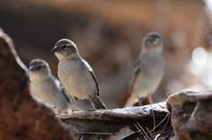 Southwest wild song birds of New Mexico in the forest deep woods habitat Stock Photos