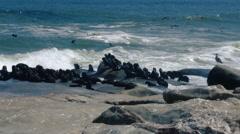 Namibia - Skeleton Coast Fur Seals Swimming and Sea Birds 2 Stock Footage