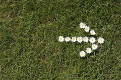 Daisies in the shape of an arrow - stock photo