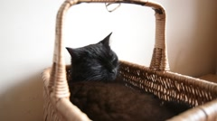 Black Cat Sitting in a Wicker Basket - stock footage