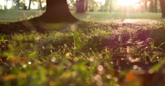 Sunset going down across grass and trees in park 4k Stock Footage