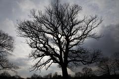 Tree and stormy sky Kuvituskuvat