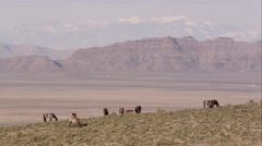 Zoomed view of the Utah landscape with wild horses Stock Footage