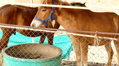 horse in the farm - stock footage