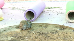 Rabbit in hutch in farm Stock Footage