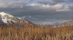 Slow moving clouds above snow capped mountains and field of tamarisk grass. Stock Footage