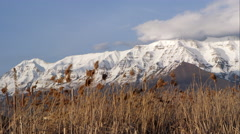 Panning view of snow capped mountains behind field of tamarisk grass. Stock Footage