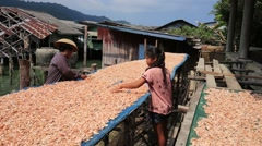 Thai woman and girl working with dry shrimps in the fishing village. Thailand Stock Footage