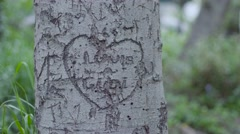 Love Carving in Tree Close Up - stock footage
