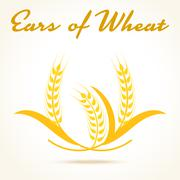 Wheat ears or rice icon. Crop, barley or rye symbol - stock illustration