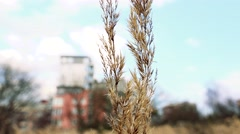 Dry culm of grass on field with block of flats in background- closeup culm Stock Footage
