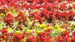 Flowers in public park in Karlovy Vary Stock Footage