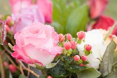 Water droplets on a pink rose Stock Photos