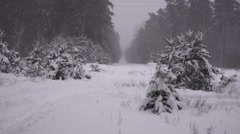 Winter scene: road and forest with hoar-frost on trees Stock Footage