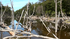Ushuaia - Tierra del Fuego - Damage Forests Stock Footage