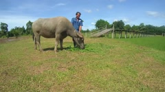 Thai farmer feeds the Water buffaloordomestic Asian water buffalo(Bubalus Stock Footage