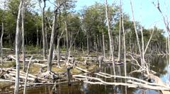 Ushuaia - Tierra del Fuego - Damage Forests Stock Footage