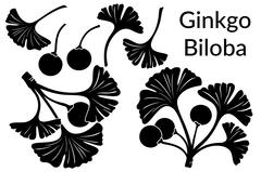 Ginkgo Biloba Leaves Pictograms Stock Illustration
