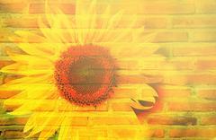 sunflower bush and texture of layer bricks - stock photo