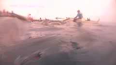 Whale shark (Rhincodon typus) - stock footage