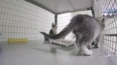Little kittens in a cage at the animal shelter Stock Footage