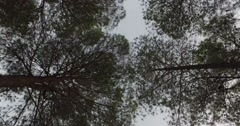 Walking through the forest, bottom up view - stock footage