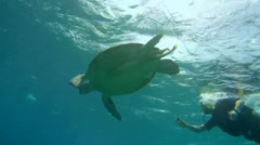 Diver shooting at GoPro green sea turtle (Chelonia mydas) Stock Footage