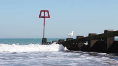 Seagull on wooden post by the British seaside Stock Footage