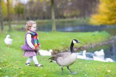 Cute toddler girl chasing wild geese at a lake in an autumn park Stock Photos