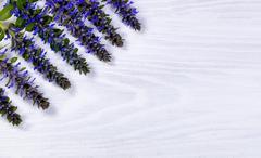 Seasonal wild blue flowers white wood background Stock Photos