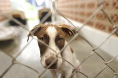 Shelter Dog - stock photo