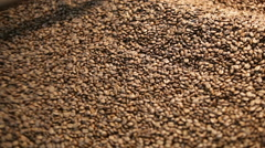 Arabica beans in coffee roaster Stock Footage