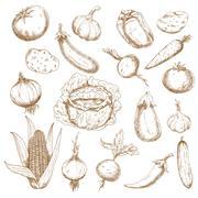 Stock Illustration of Retro sketches of autumn harvest vegetables