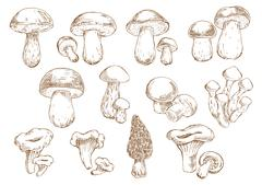 Edible mushrooms sketch drawing icons Stock Illustration