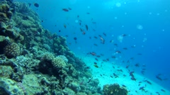 Freediver considering school of fish on the coral reef Stock Footage