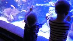 Children looking at fish in a big aquarium. Stock Footage