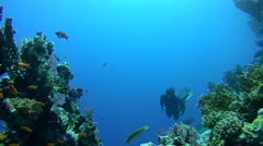 Freediver dives over the coral reef Stock Footage