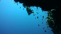 Freediver dives near the coral reef Stock Footage