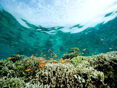 Coral reef scene. Stock Photos