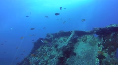 Freediver dives on the wreck SS Thistlegorm - stock footage