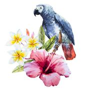 Stock Illustration of Watercolor hibiscus flower and parrot