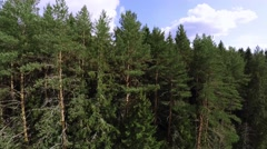 Flight to tree height level. Flying above the forest Stock Footage