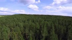 Flying above the forest, flight to tree height level Stock Footage