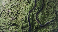 Flight over winding forest river - Aerial Stock Footage