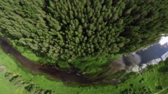 Dense coniferous forest Stock Footage