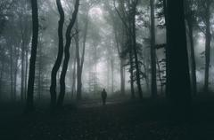 Man in mysterious dark forest with fog Stock Photos