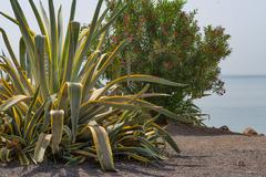 Vegetation near the Sea of Galilee Stock Photos