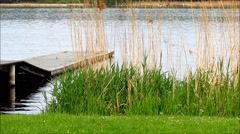 Wooden jetty in lake with grass and reed Stock Footage
