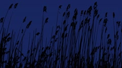 Sunset Through the Reeds. Silver feather grass swaying in wind. Stock Footage